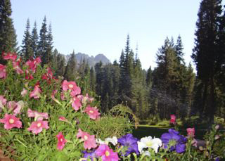 flowers and mountain